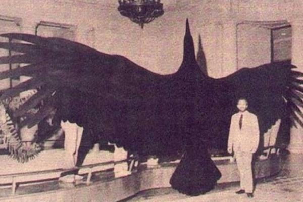 """1. Yes, that is a real bird. Known as the """"Magnificent Argentine Bird"""", this bird lived around 6 million years ago on the plains of Argentina and in the Andes Mountains. It had a wingspan of around 21 feet, taller than two regulation basketball hoops stacked on top of each other! It's feathers were as long as samurai swords."""