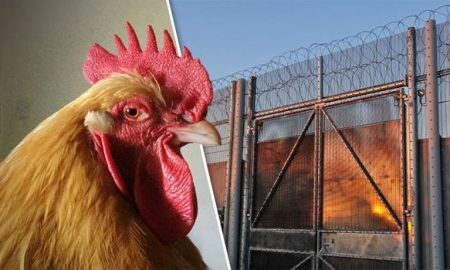 Kenyan-man-jailed-for-raping-a-chicken-could-not-find-a-girlfriend-774563