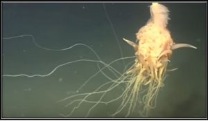 . A team from BP was carrying out routine operations near an oil well, using a remotely operated underwater vehicle (ROV) at a depth of 1325 metres, when they spotted the creature, which they nicknamed the flying spaghetti monster.