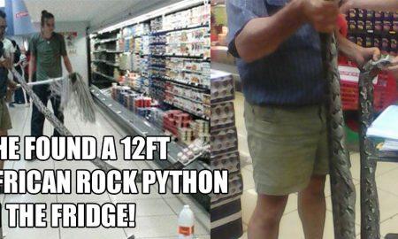 snake-in-spar-fridge