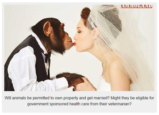 Monkey-Sex