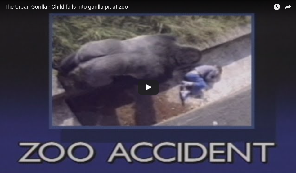 [VIDEO] Child Falls Into Gorilla Pit At Zoo