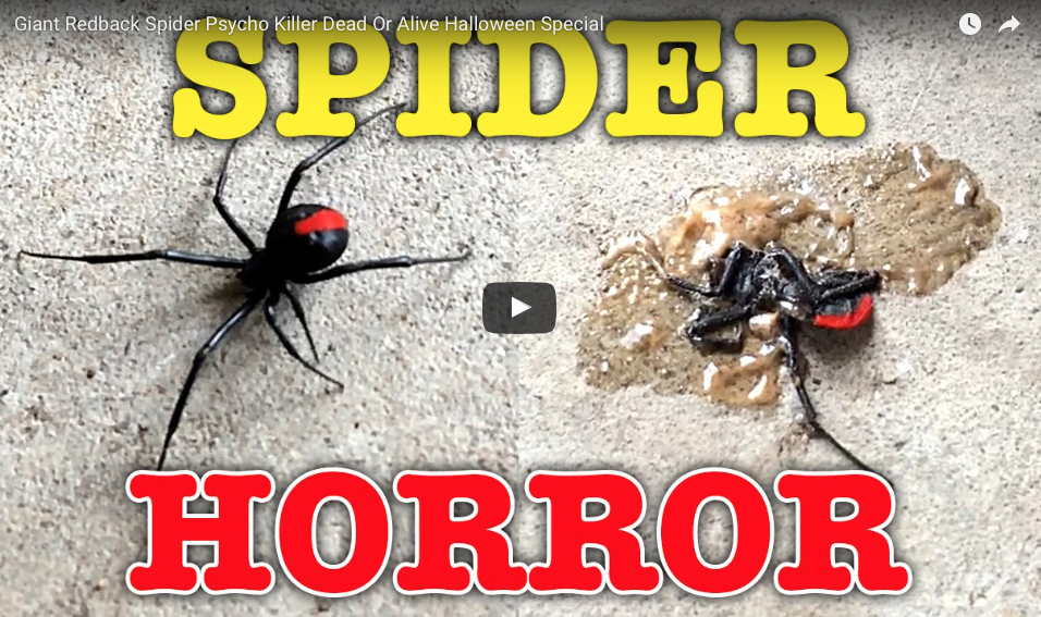 Terrifying Redback Spider Bites Man On Penis Before He Can Beat It Off