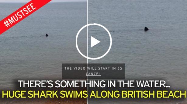 [WATCH] Terrifying Moment A Monster SHARK Swims Yards From Popular Beach