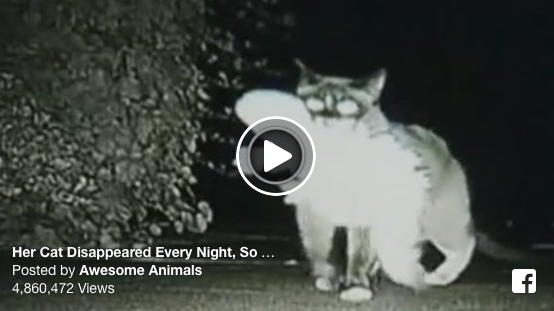 Her Cat Disappeared Every Night, So She Set Up A Hidden Camera...