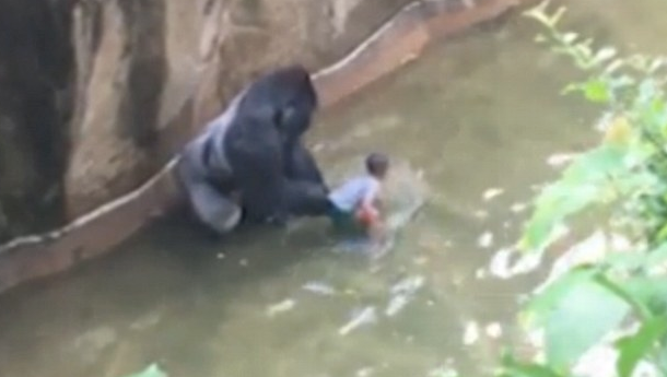 Gorilla Shot: Angry Blacks Claim White Privilege, Turns Out The Boy Is Black