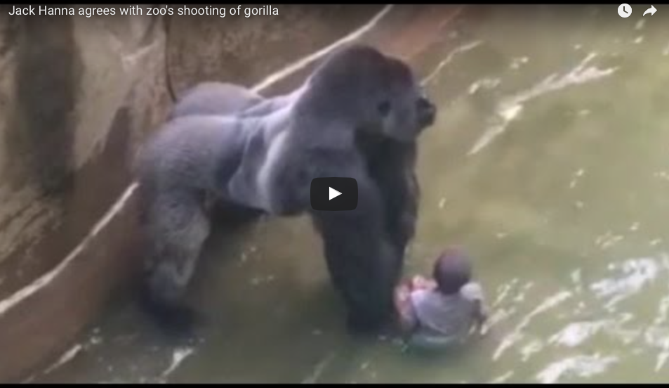 [WATCH] This New Camera Angle Will Show What The Gorilla Really Did After The Boy Fell In