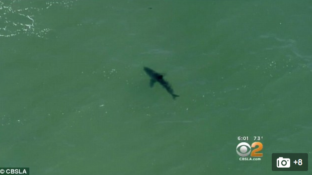 [WATCH] Multiple Sharks Spotted, So Massive That California Beaches Close
