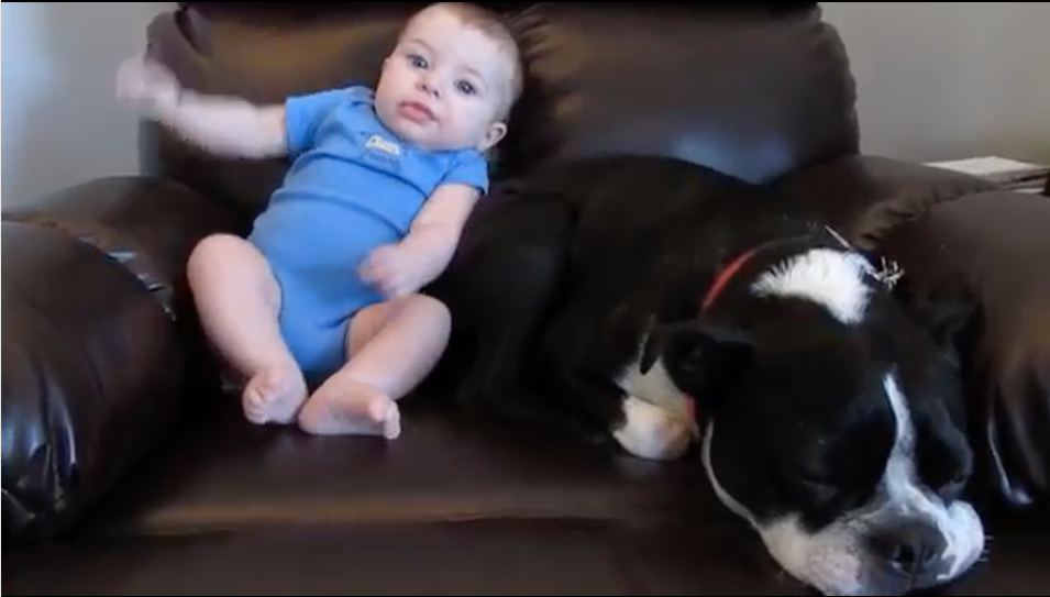 Baby Poops His Diaper And Watch The Dog's Reaction - Hilarious!