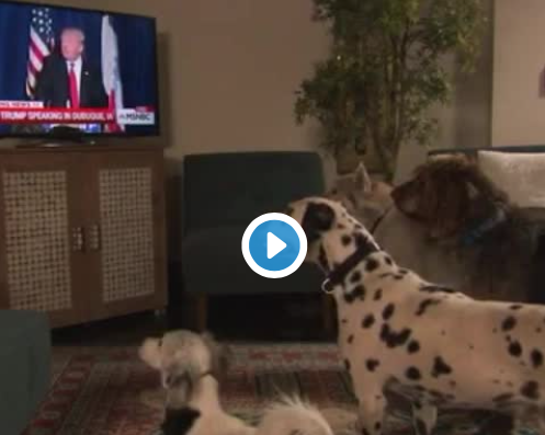 Even Dogs Obey Donald Trump! Viral Video Made It Onto The Jimmy Kimmel Show